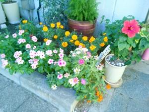 色とりどりな綺麗な花