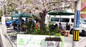 桜の下でランチタイム