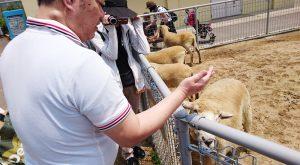 ヤギや羊へみんなでエサやり